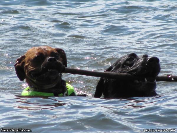 Dogs in the Great Sacandaga